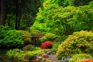 Bridge at the Japanese Garden