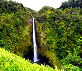 Hawaii-Big Island-31