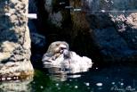 NYC Aquarium-11