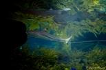 NYC Aquarium-12
