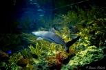 NYC Aquarium-13