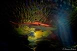 NYC Aquarium-14
