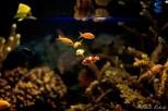 NYC Aquarium-16