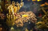NYC Aquarium-17