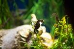 NYC Aquarium-22