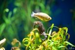 NYC Aquarium-24