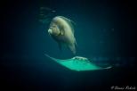 NYC Aquarium-4