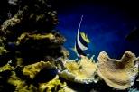 NYC Aquarium-5