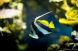 NYC Aquarium-6